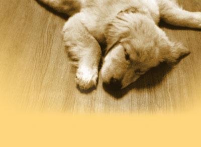 5 Scientific Methods to Make You Sleepy